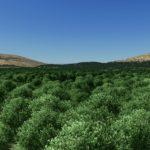 シティーズ・スカイライン Leafy Tree 緑が美しい樹木Mod